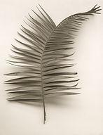 Folia Leaf no. 38