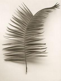 Leaf no. 38