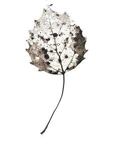 Leaf no. 40