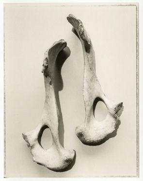 Bones no. 6