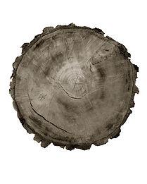Tree Circle no. 6