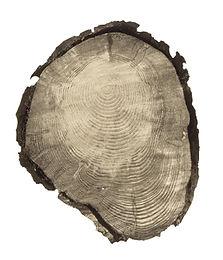 Tree Circle no.16