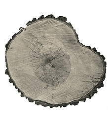 Tree Circle no.7