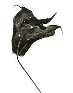 Leaf no. 13