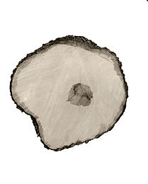 Tree Circle no. 4