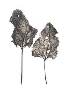 Leaf no. 11