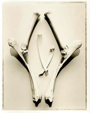 Bones no. 4