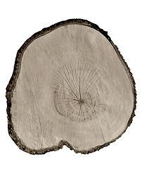 Tree Circle no. 3