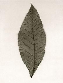 Leaf no. 31