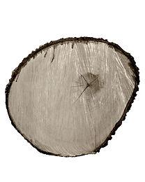 Tree Circle no. 2