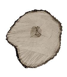 Tree Circle no. 1