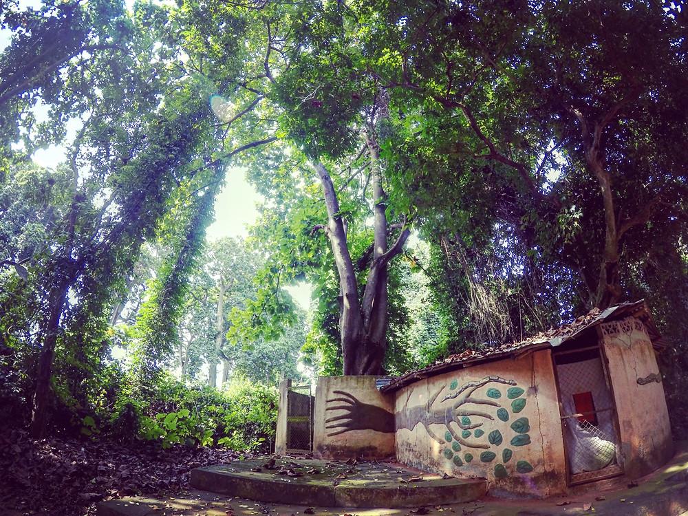 Legenda noidutusta puusta
