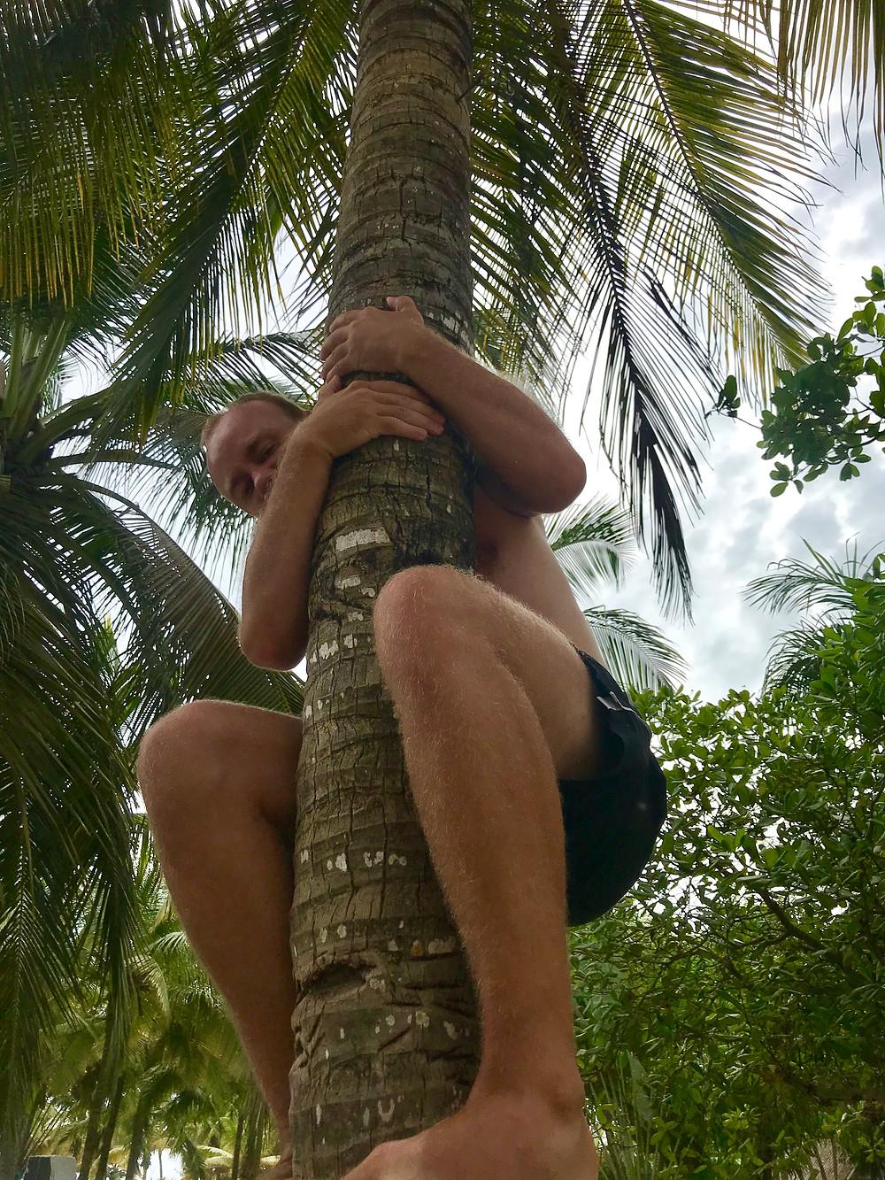 Villejä piilossa palmussa