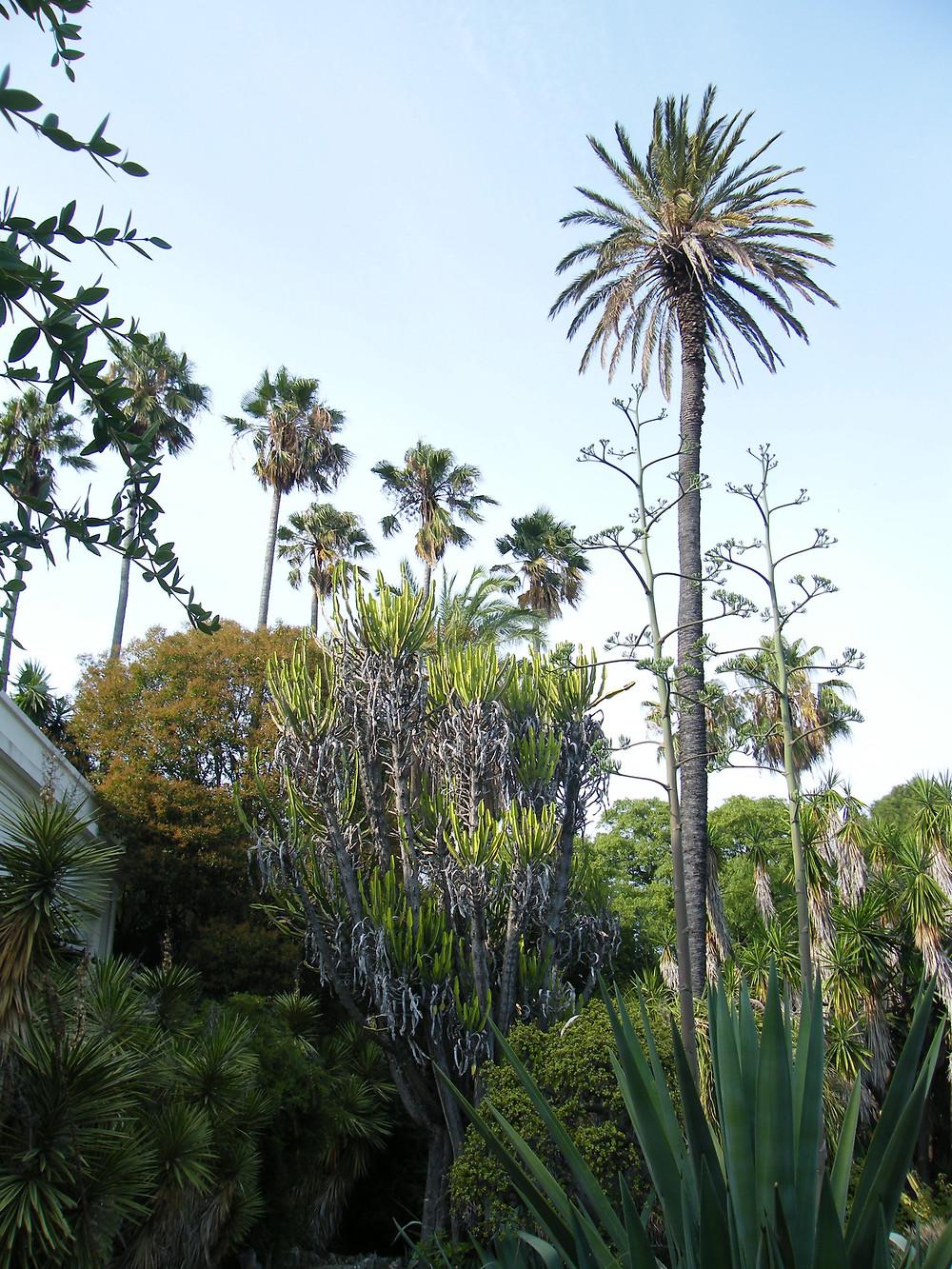 Botaaninen puutarha