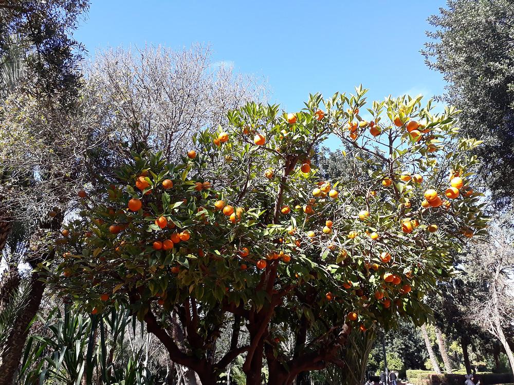 Perus puu