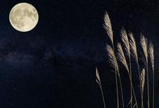 月より団子?!子どもと楽しむ今年のお月見♪