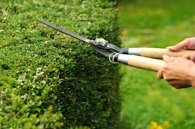 Scrub Pruning