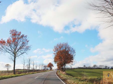 德國-北部|親子自由行|漫步雲霧仙境-德國下奧得河河谷國家公園