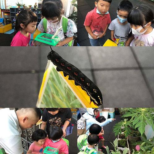 新北市私立華人幼兒園