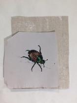 Japanese Beetle (2016)