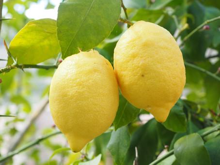 En mars, l'Essence de Citron...