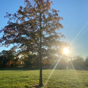 Fall2020_Tree2.jpg