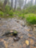 stream2020_13.jpg