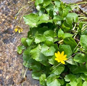 Stream_flower.jpg