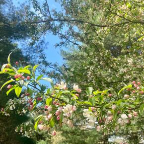 Blooming_trees2020_2.jpg