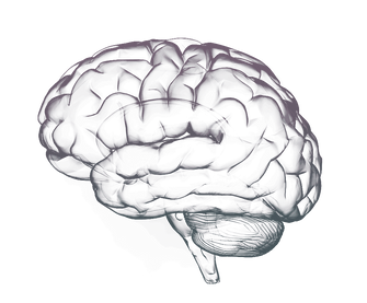 Brain-Free-PNG-Image.png