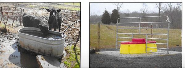 cattlewatering.jpg