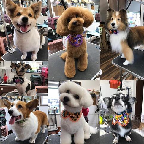 MIX犬のトミー君✨_MIX犬のマメ吉君✨_コーギーのたけお君✨_プードルのあも