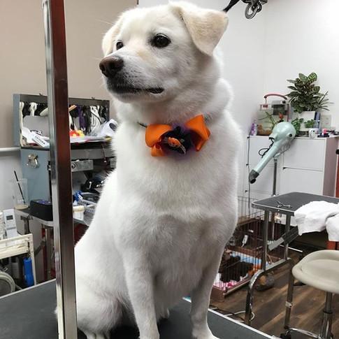MIX犬のシロ君✨_雨の中ご来店有難う御座いました!_#mix犬 _#仙台ペット