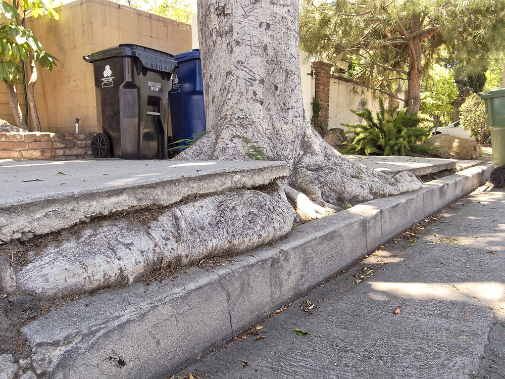 Trip and Fall - Dangerous Condition in Sidewalk - Injury Lawsuit Revived on Appeal