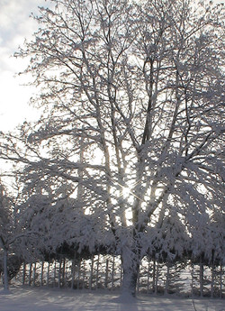 33 winter-hiver