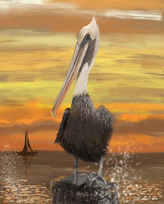 Pier 60 Pelican