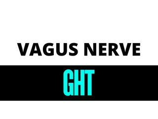 The What, Why and How of the Vagus Nerve