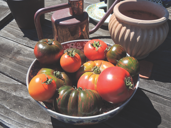 Garden Plot: Take care of your tomatoes to ensure bountiful harvest