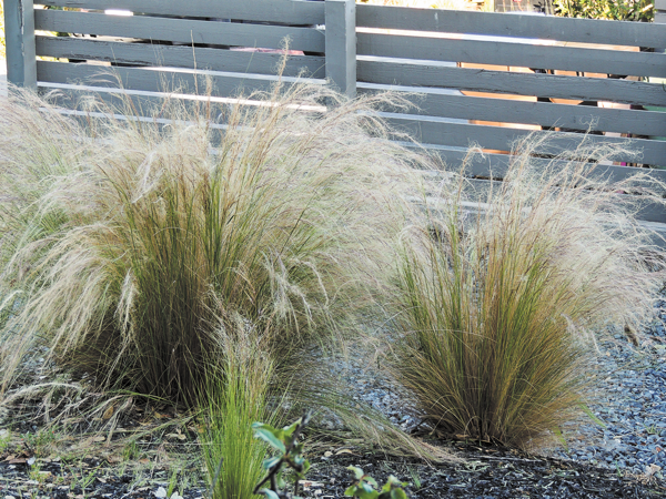 Garden plot: Invasives can wreak havoc on the garden