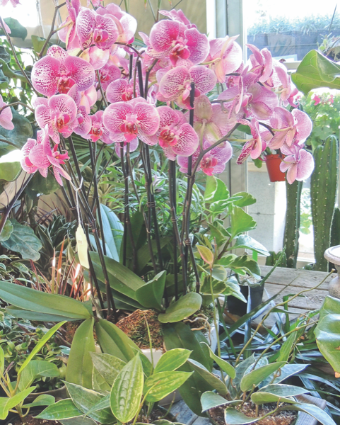 Garden Plot: Variety of indoor plants can spruce up the home