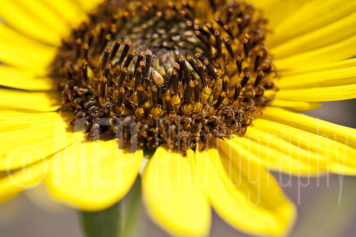 Flower (5).jpg