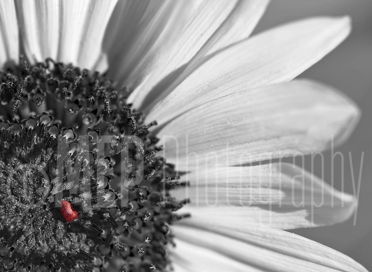 Flower (3).jpg