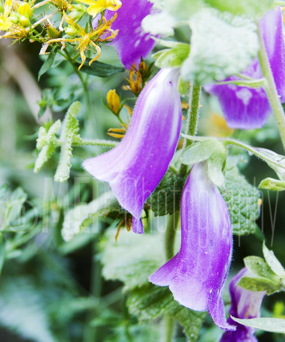 Flower (6).jpg