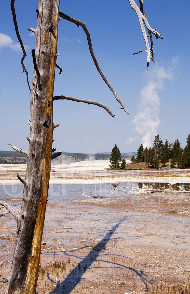 Yellowstone National Park (4).jpg
