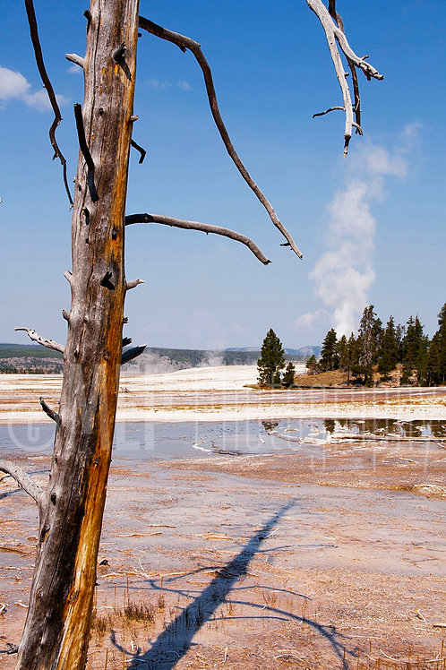 Yellowstone National Park (4)