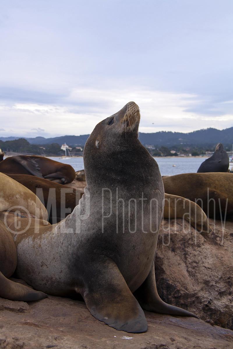 Sea lion (2).jpg