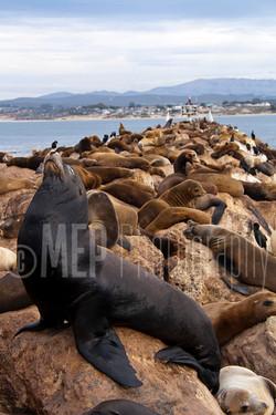 Sea lion (3).jpg
