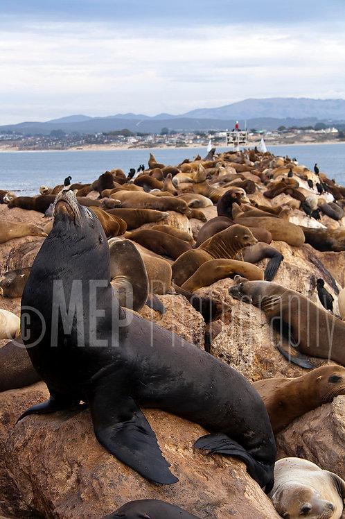 Sea lion (3)