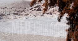 Yellowstone National Park (5).jpg