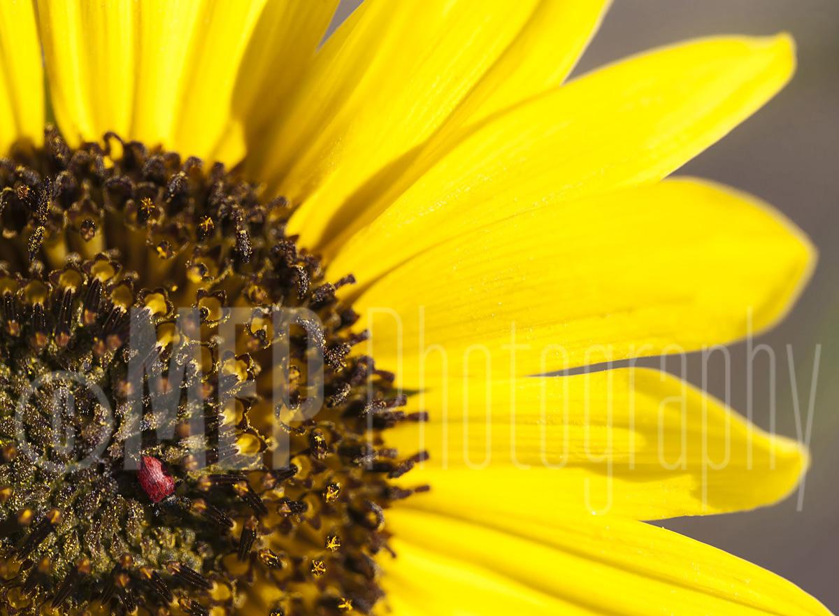 Flower (4).jpg
